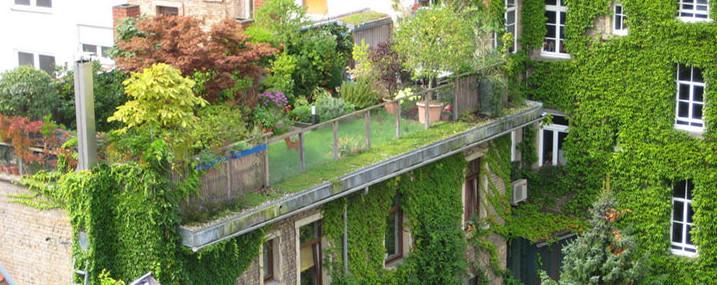 Gemeinsame Dachbegrünung als ökologische Maßnahme | Die Grünen | Ratsfraktion @TC_84